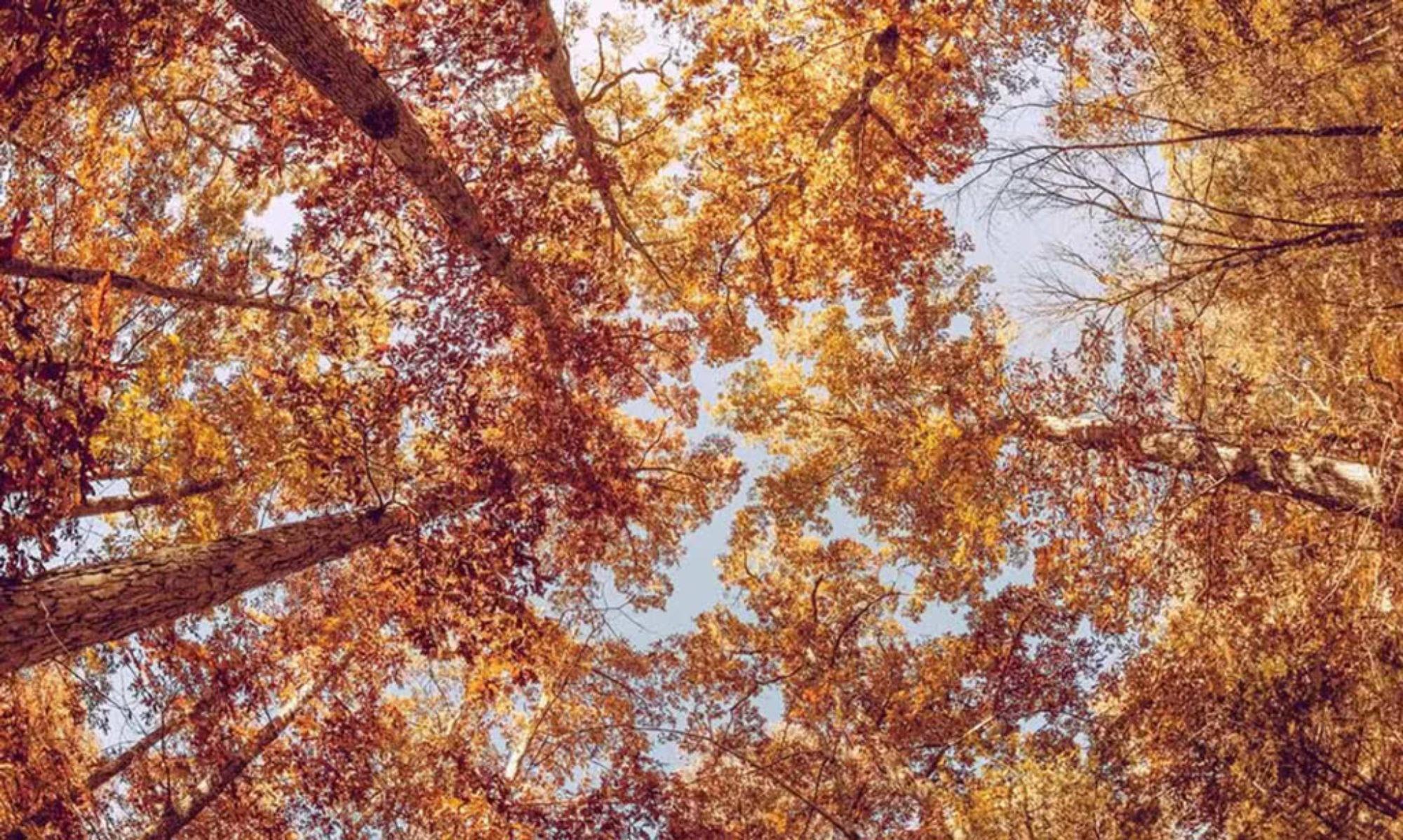 La speranza sotto le foglie